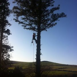 Scanlon Tree Services